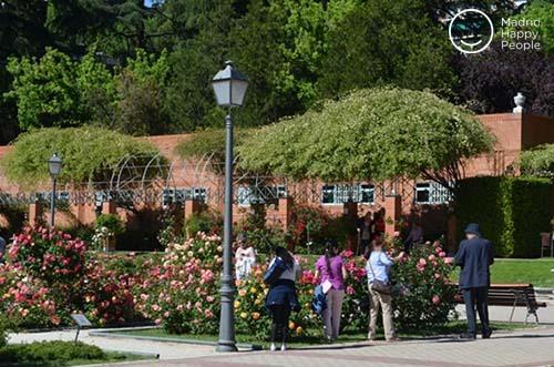 rosaleda parque del oeste madrid