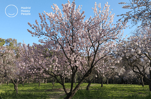 Quinta De Los Molinos Almendros En Flor Madrid Happy People
