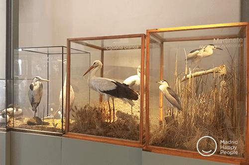 exposiciones museo ciencias madrid