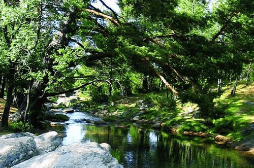 Bosque Finlandés Rascafría