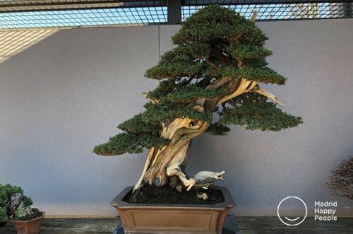 museo del bonsái madrid