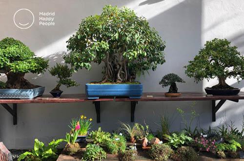 museo bonsái madrid