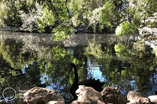 Parques Madrid