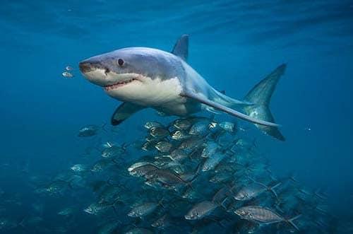 exposición tiburones madrid