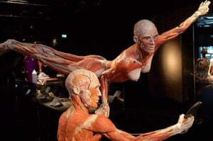 exposición body worlds madrid - exposición cuerpo humano madrid