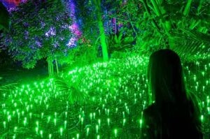 luces navidad real jardin botánico madrid - explorium - naturaleza encendida explorium